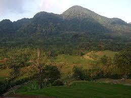 Ilustrasi: hutan lindung