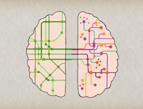 Bagian otak kiri dan otak kanan aktif bersamaan dan terkoneksi satu sama lain.